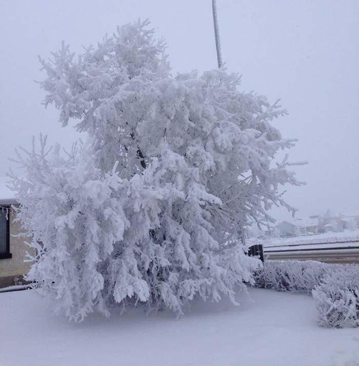snowyweb